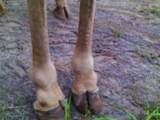 giraffes-feet-foto-widzialne
